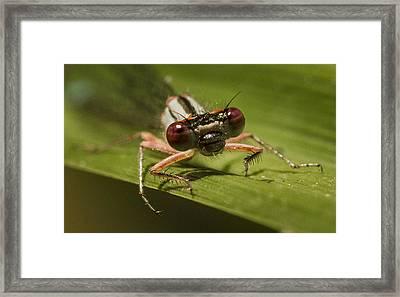 Bug Eyes Framed Print by Jean Noren