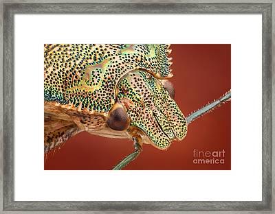 Bug Head Framed Print by Matthias Lenke