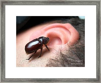 Bug In The Ear Framed Print by Sinisa Botas
