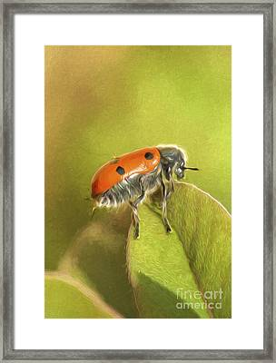 Bug On Leave Framed Print