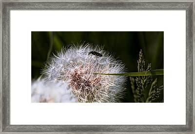 Bug On Seed - Leif Sohlman Framed Print by Leif Sohlman