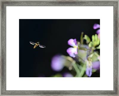 Bug Out Framed Print