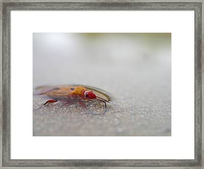 Bug Skimming Framed Print
