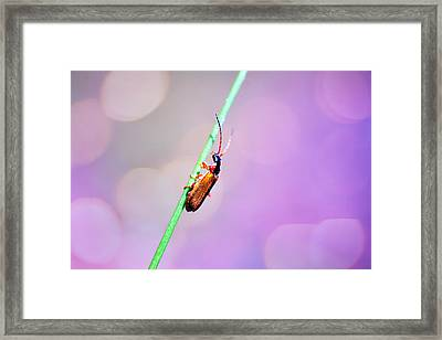 Bugg On A Stick Framed Print by Tommytechno Sweden