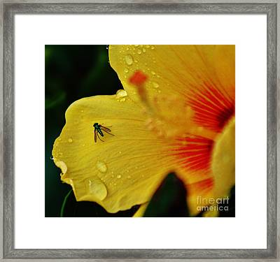 Bugged Hibiscus Framed Print
