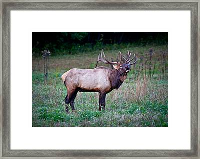 Framed Print featuring the photograph Bugle Solo From Bull Elk by John Haldane