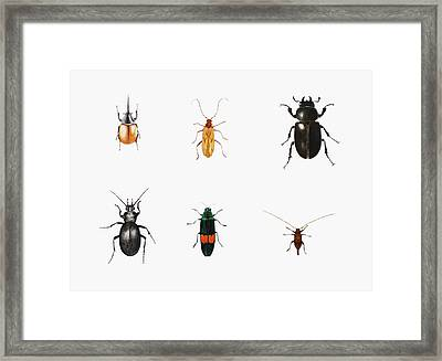 Bugs Framed Print by Ele Grafton