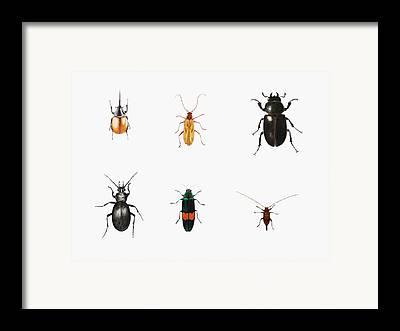 Bugs Framed Prints