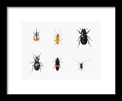 Bug Framed Prints