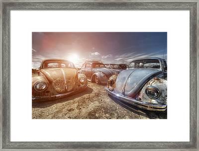 Bugs In The Sun Framed Print