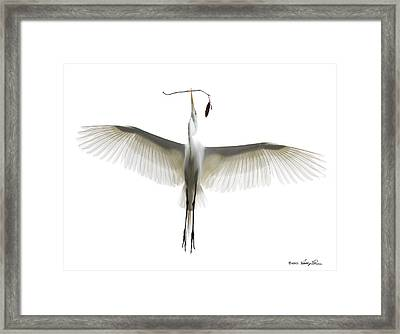 Building The Nest Framed Print by Kathy Ponce