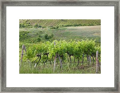 Bulgaria, Southern Mountains Framed Print