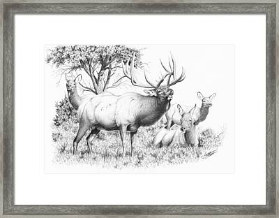 Bull And Harem Framed Print