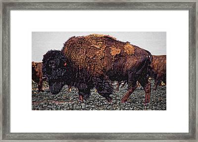 Bull Buffalo Framed Print by Daniel Hagerman