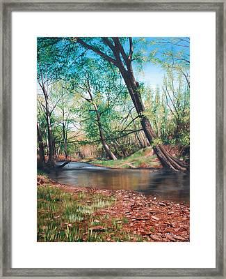 Bull Creek Framed Print