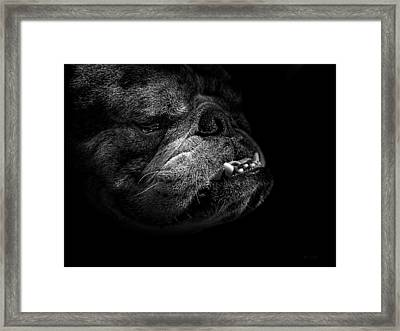Framed Print featuring the photograph Bull Dog by Bob Orsillo