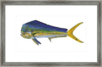 Bull Dolphin Framed Print by Carey Chen