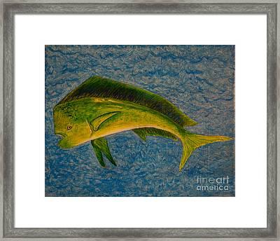 Bull Dolphin Mahimahi Fish Framed Print
