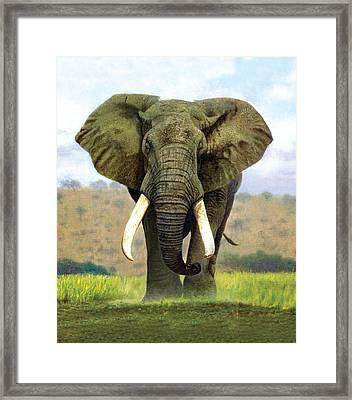 Bull Elephant Framed Print by Chris Heitt