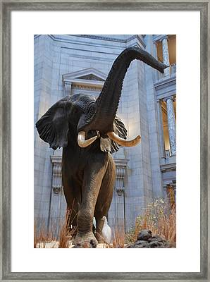 Bull Elephant In Natural History Rotunda Framed Print