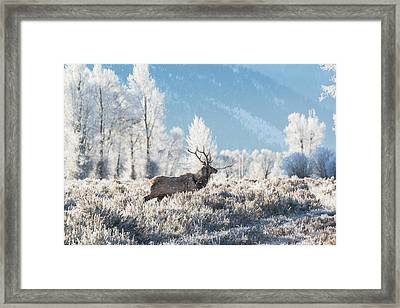 Framed Print featuring the photograph Bull Elk At Winter Dawn by Yeates Photography