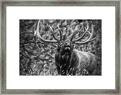 Bull Elk Bugling Black And White Framed Print by Ron White