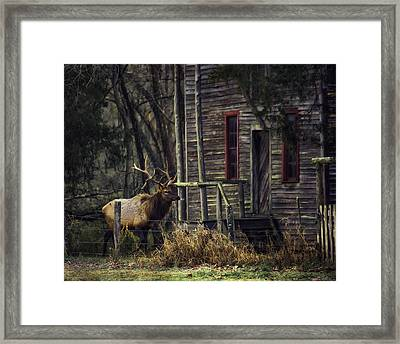 Bull Elk By The Old Boxley Mill Framed Print