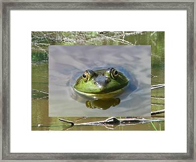 Bull Frog And Pond Framed Print