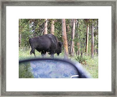 Bull Framed Print by Jeff Pickett