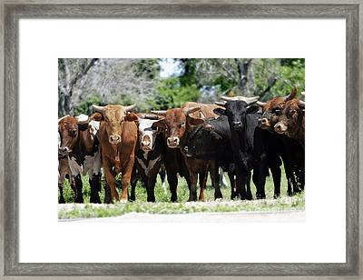 Bull Market Framed Print by Lincoln Rogers