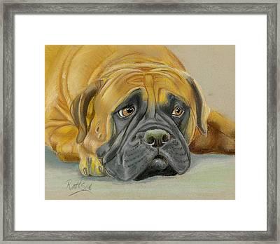 Bull Mastif Framed Print