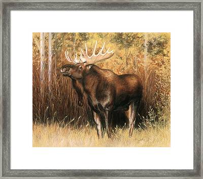 Bull Moose Framed Print by Karen Cade