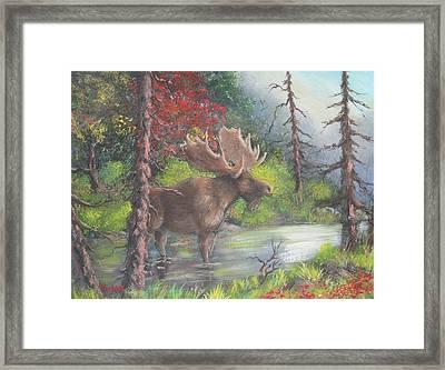 Bull Moose Framed Print by Megan Walsh