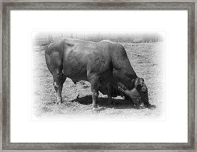 Bull Number 07 Framed Print