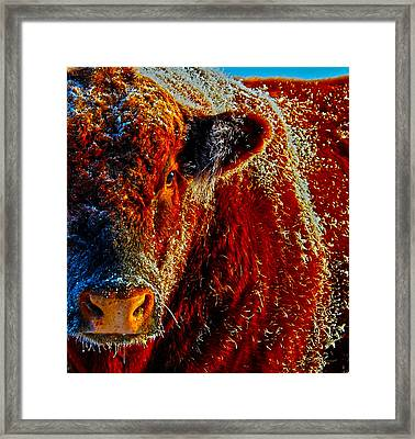 Bull On Ice Framed Print