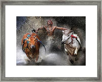 Bull Race Framed Print by Wei Seng Chen