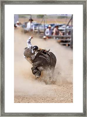 Bull Riding Framed Print by Delphimages Photo Creations