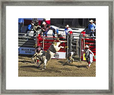 Bull Riding Framed Print by Ron Roberts