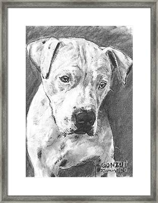 Bull Terrier Sketch In Charcoal  Framed Print by Kate Sumners