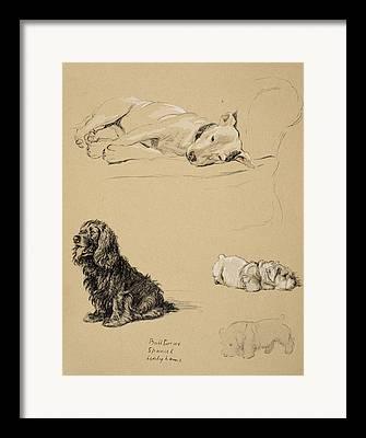 Cocker Spaniel Drawings Framed Prints