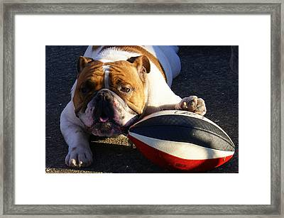 Bulldog And Ball Framed Print by DerekTXFactor Creative