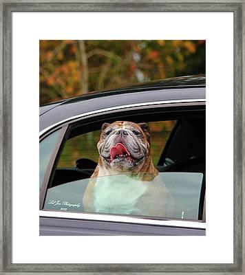 Bulldog Bliss Framed Print