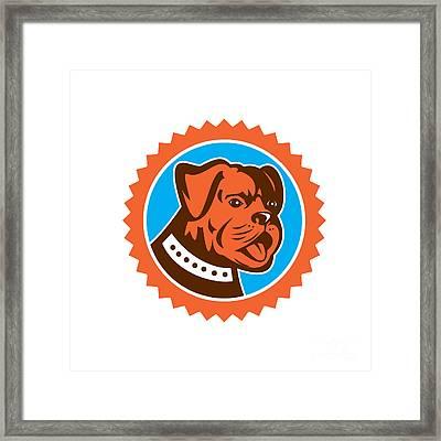 Bulldog Dog Mongrel Head Mascot Rosette Framed Print by Aloysius Patrimonio