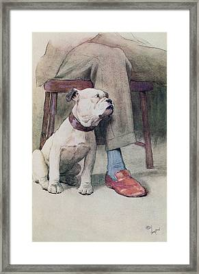 Bulldog Pen & Ink & Wash On Paper Framed Print by Cecil Charles Windsor Aldin