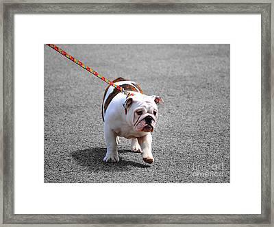 Bulldog Puppy I Framed Print