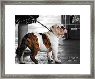 Bulldog Puppy IIi Framed Print