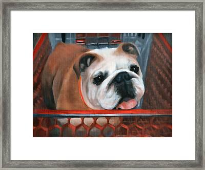 Bulldog Shopping Framed Print by Peter Hogg
