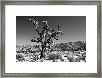 Bullet The Blue Sky - Joshua Tree N.p Framed Print