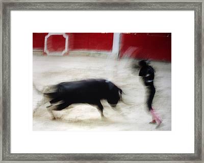 Bullfight  1 Framed Print by Daniel Gomez