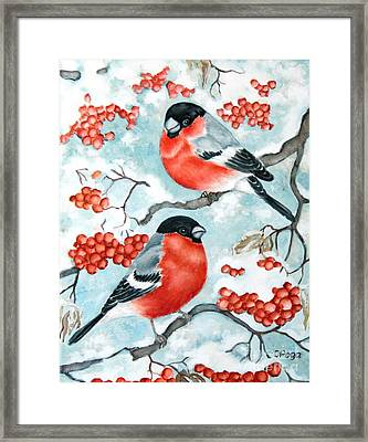 Bullfinch Couple Framed Print
